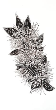 Hakea Petiolaris by Jeanette Giroud Australian Plants, Simple Doodles, Plant Art, Buy Art Online, Original Artwork, Ink, Drawings, Illustration, Sea Urchin