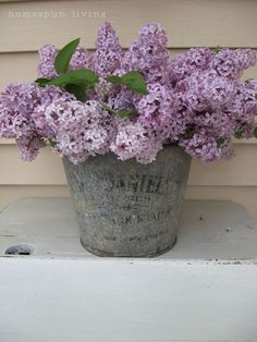 Lilacs in an old tin bucket.