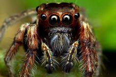 #spider #face