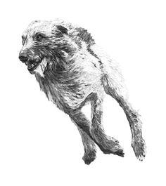 runnig wolfhound