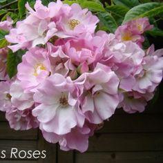 apple-blossom1 Garden Spaces, Floral Wreath, Wreaths, Apple, Flowers, Plants, Roses, Apple Fruit, Floral Crown