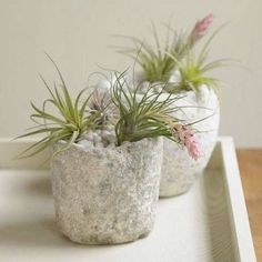 10 Ways to Display Air Plants