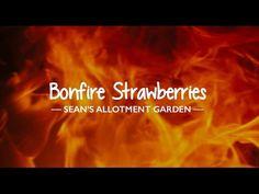 Sean's Allotment Garden: Bonfire Strawberries (S3/EP27) - YouTube