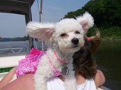 Puppy Loves Boating #budgettravel #travel #puppy #cute #dog #italy www.budgettravel.com