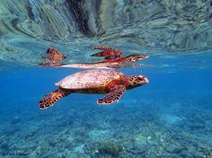 Sea Turtle by Cara Daneel