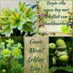 Morning Inspirational Quotes, Good Morning Quotes, African Dessert, Lekker Dag, Goeie More, Afrikaans Quotes, Place Card Holders, Bible, Fancy