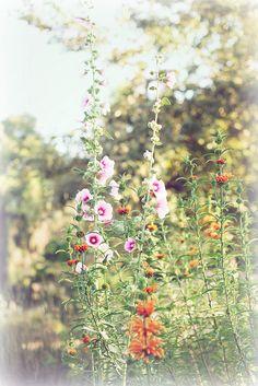 Autumn moments | Flickr