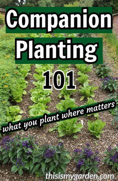 Companion Planting 101 – What you should plant next to each other to maximize your garden. Companion Planting 101 – What you should plant next to each other to maximize your garden. Raised Vegetable Gardens, Vegetable Garden For Beginners, Gardening For Beginners, Gardening Tips, Vegetable Gardening, Porch Vegetable Garden, Vegtable Garden Layout, Gardening Courses, Veggie Gardens