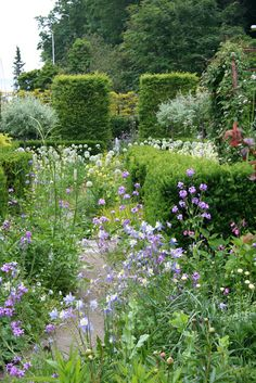 Hedges, columns, pleached hedging and flowers | Claus Darby's garden