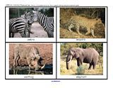 African Animals flashcards --- I like having some photos as opposed to graphics sometimes