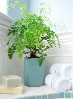 Love plants in the bathroom