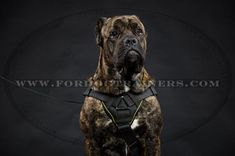 Brand New Multifunctional Cane Corso Nylon Harness Cane Corso Harness with Chest Plate] - Innovative Tracking and Pulling Nylon Dog Harness for Dog Training Equipment, Leash Training, Dog Harness, Dog Leash, Dog Muzzle, Retriever Puppy, Cane Corso, Small Breed, Dog Supplies