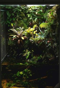 Beautiful enclosed rainforest paludarium; a tall one like this would suit fish, reptiles and even birds