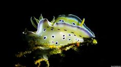 Bióloga apresenta grande variedade de espécies de moluscos marinhos - 4 (© Copyright British Broadcasting Corporation 2013)