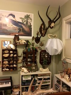 """snakesandkittens: """"Day What is your collection mostly; bones, pelts, taxidermy, a mixture? Plus some bones and antlers thrown in there. """" an excellent and small ossuary"""