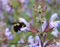 See the other image in this series here:  http://ayearofpics.wordpress.com/2012/04/28/busy-as-a-bee/