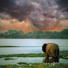 elephant, water and clouds