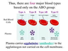 Type A Type B, Blood Plasma, Red Blood Cells, Cooking Timer, Ants, Ant