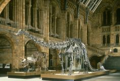 The Natural History Museum The dinosaur exhibits to this day hold me in complete awe. South Kensington London, Kensington And Chelsea, Natural History Museum London, London History, National Rail, History Images, London Transport, Museum Shop, Museum Exhibition