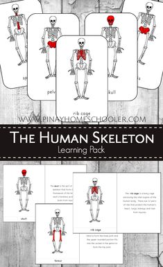 Human Skeleton Learning Pack (Montessori 3 part cards and definition cards)