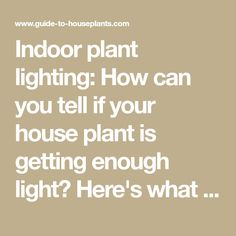 Indoor plant lighting: How can you tell if your house plant is getting enough light? Here's what you should know about indoor plant light...