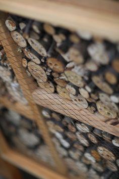 Hotele dla owadów / Insects hotel [foto: Remigiusz Śmietana]