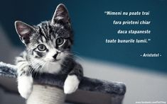 Spiritual Quotes, Cute Animals, Spirituality, Thoughts, Cats, Friends Forever, Inspirational, Spirit Quotes, Gatos