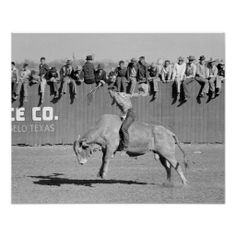 Shop Rodeo Bull Rider, Vintage Photo Poster created by HistoryPhoto. San Angelo, Bull Riders, Custom Posters, Vintage Photos, Westerns, Texas, Black And White, History, Artwork