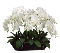White Phalenopsis Silk Orchid Arrangement in Oval Container ARWF1153