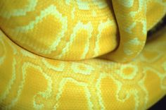 pretty snake  #animals #reptile #yellow
