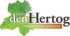 Jan den Hertog - Tuinplanten Boskoop parasolbomen