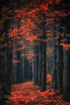 Autumn color #6 - null )