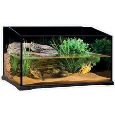 set-up idea for aquatic turtles