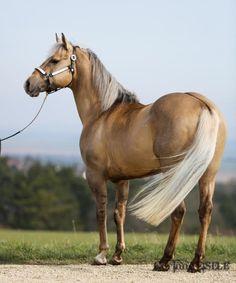 Domaine du Vallon. Hollywood Dolby  #Horse horse