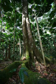 Amazing rainforest #Ecotourism #Rainforest #Green #VisitGuadeloupe #GuadeloupeIslands