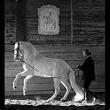 classical dressage