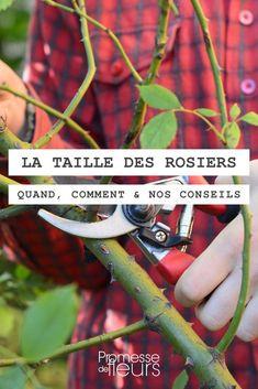 Planter Des Roses, Comment Planter, Permaculture, Horticulture, Vegetables, Flowers, Plants, Ainsi, Plantation