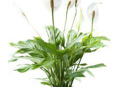 attraktive gr npflanzen deko home pinterest pflanzen garten und zimmerpflanzen. Black Bedroom Furniture Sets. Home Design Ideas