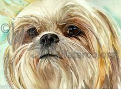 Shih Tzu Dog Art Print of Watercolor Painting Judith Stein Signed | eBay