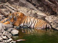 Animal Sanctuaries in Rajasthan, India @ Sanctuariesindia.com