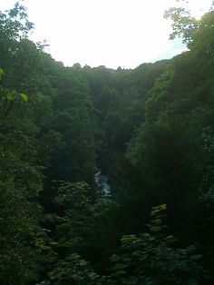 Jesmond Dene park,Newcastle upon Tyne