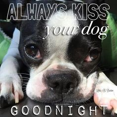 """Always kiss your dog goodnight. hope your doing well! ! Phoenix dog training """"k9katelynn"""" See more about Scottsdale dog training at k9katelynn.com ! See more on Pinterest with over 21,200 views! Google plus with over 280,000 views! Proudly serving the valley for 11-1/2 years!! LinkedIn with over 10,000 associates! Now on instant gram! K9katelynn!"""