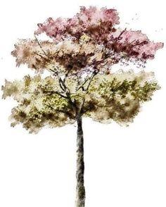 Resultado de imagen para architecture sketch trees