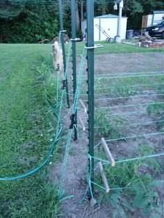 Creative Tomato Supports   Pin by Donitta Robinson on Tomatoes/Vegetables   Pinterest Grape Trellis, Tomato Trellis, Tomato Cages, Tomato Garden, Tips For Growing Tomatoes, Growing Tomato Plants, Growing Tomatoes In Containers, Grow Tomatoes, Easy Garden