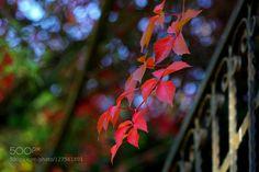 Autumn by emre1907sbl #fadighanemmd