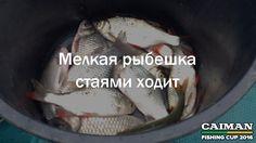 Мелкая рыбешка стаями ходит   Поговорки о рыбалке от Caiman Fishing Cup 2016. http://www.caiman.ru/fishing/  Следите on-line за нашим уловом!  #рыбалкавастрахани #caimanfishingcup #рыбалка #астрахань #мумра #база177