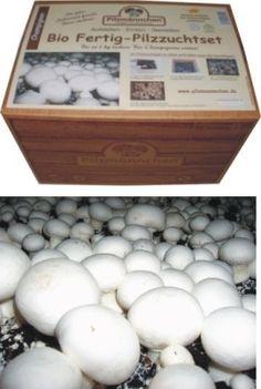 champignons und viele andere pilze kann man leicht selbst. Black Bedroom Furniture Sets. Home Design Ideas
