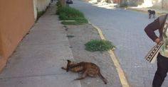 Encuentren al mataperros que envenenó y quemó a 5 inocentes animalitos FIRMA Y COMPARTE ESTA...