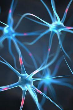 Nerven und deren Entzündung bei einer Gürtelrose  Ein Nerv bezeichnet einen Erregungsleiter, der aus verschiedenen Nervenfasern und Bindegewebe besteht. Legen sich bei einer Gürtelrose die Viren an die Nervenstränge, kommt es zu einer schmerzhaften Entzündung. Nerven bestehen aus von Bindegeweben umgebenden Nervenfasern und dienen der Informationsübermittlung vom zentralen Nervensystem zu den unterschiedlichen Gebieten des Körpers. Die anatomischen Strukturen unterliegen einer Einteilung…