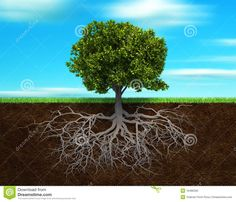 Pics For > Tree Roots Illustration
